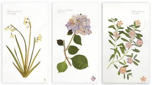 blackwell_flowers